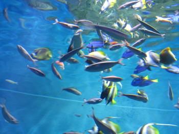 2016水族館ドライブ4
